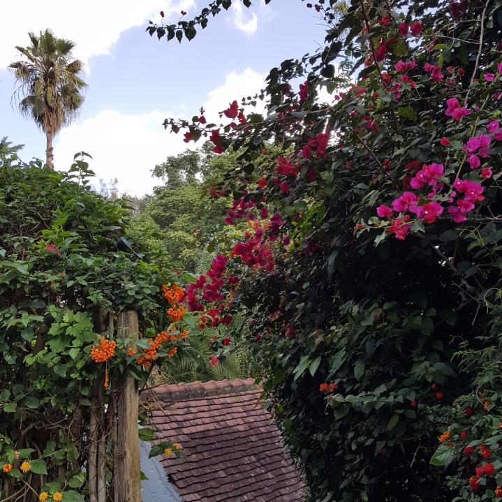KENYA | THE SECOND FLIGHT AND FIRSTNIGHT